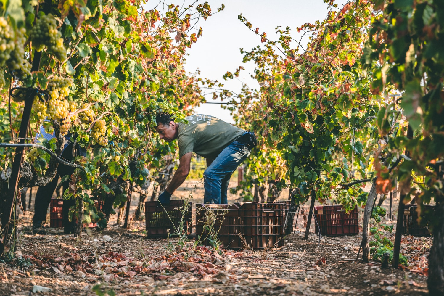 The Difference Between Organic & Biodynamic Wines